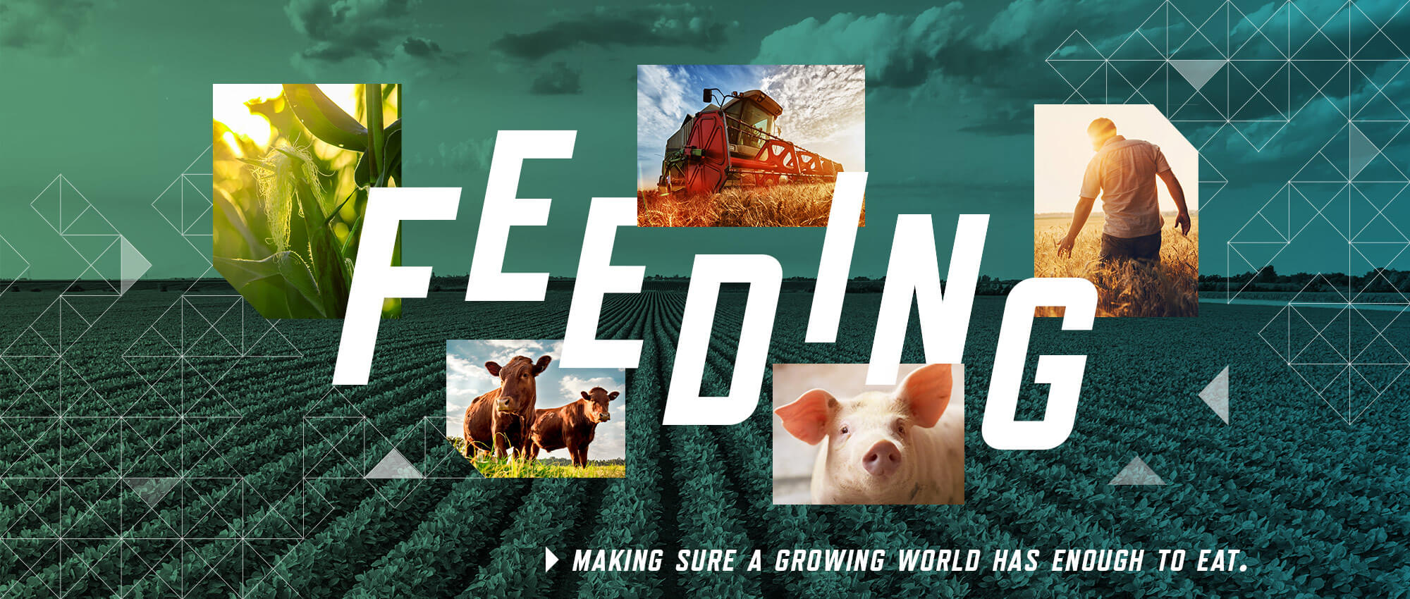 feeding: making sure a growing world has enough to eat. Images of wheat, corn, fields, cows, pigs and farm equipment.